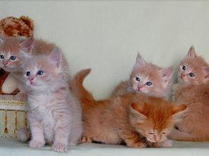 Как назвать рыжего котенка. Клички для котят рыжего цвета