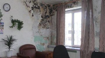 Вред от грибка в квартире на стене