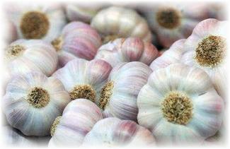 Чеснок озимый скиф описание и характеристика сорта выращивание с фото